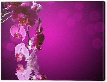 Obraz na Płótnie Orchid różowy, fioletowy tle