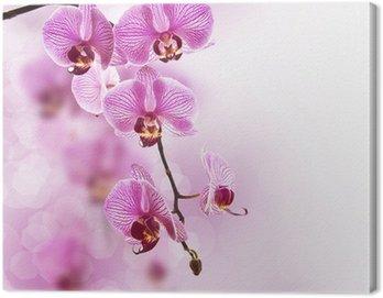 Obraz na Płótnie Orchid różowy, pastelowe tło