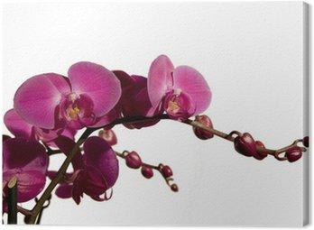Obraz na Płótnie Orchidea