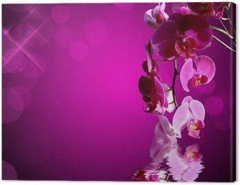 Obraz na Płótnie Orchidee rose, lubiący Carré bokeh