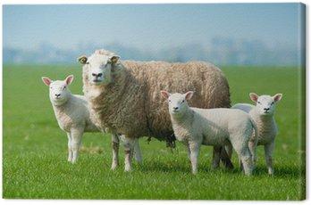Obraz na Płótnie Owca matka i jagniąt na wiosnę