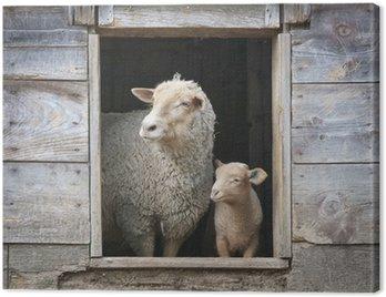 Obraz na Płótnie Owce i Mały Ewe w drewnianej stodole oknie