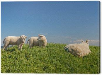 Obraz na Płótnie Owce na grobli