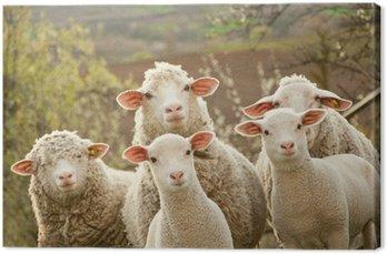 Obraz na Płótnie Owce na pastwisku