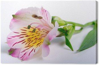 Obraz na Płótnie Pączek kwiatu