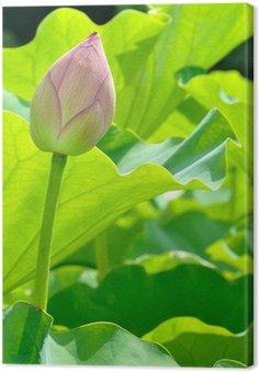 Obraz na Płótnie Pączek lotosu
