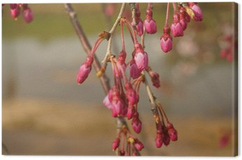Obraz na Płótnie Pączek wiśniowe