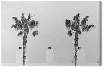 Obraz na Płótnie Palma symetrii