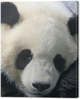 Obraz na Płótnie Panda bear jedzenia bambusa