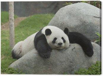 Obraz na Płótnie Panda bear spanie