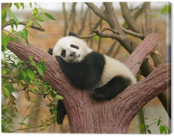 Obraz na Płótnie Panda dziecko śpi