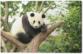 Obraz na Płótnie Panda w lesie