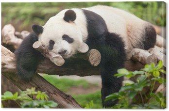 Obraz na Płótnie Panda Wielka