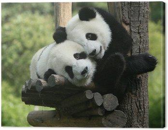 Obraz na Płótnie Panda