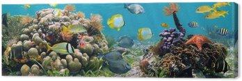 Obraz na Płótnie Panoramiczny koralowa