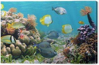 Panoramiczny koralowa