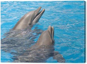 Obraz na Płótnie Para delfinów z głowy z wody
