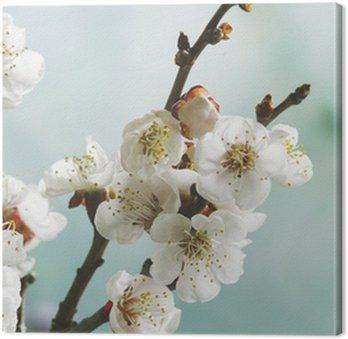 Obraz na Płótnie Pastelowych kolorach wiosny kwiat makro