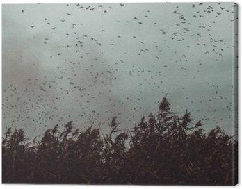 Obraz na Płótnie Pęczek ptaki latające blisko trzciny w ciemnym sky- stylu vintage black and white