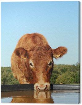 Obraz na Płótnie Picie z głową krowy Limousin Refleksji