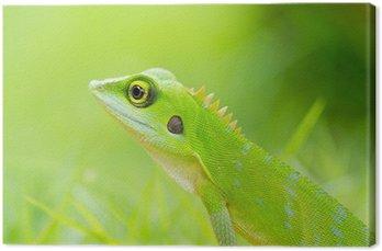 Obraz na Płótnie Piękna zielona jaszczurka gecko