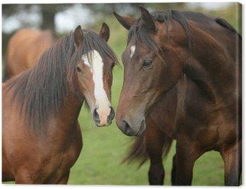 Obraz na Płótnie Piękne brązowe konie na pastwisku