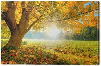 Obraz na Płótnie Piękne drzewa jesienią z opadłych liści suchych