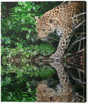 Obraz na Płótnie Piękne leopard Panthera Pardus duży kot wśród listowia refleksja