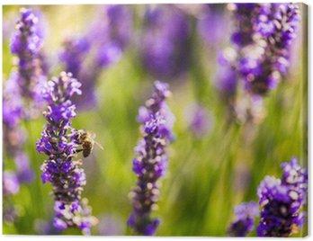 Obraz na Płótnie Piękne pola lawendy Prowansji we Francji w lipcu