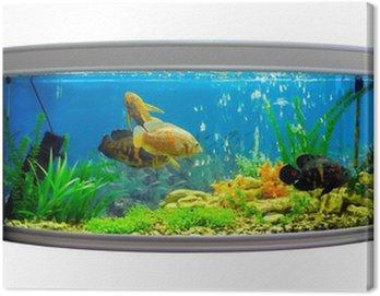 Obraz na Płótnie Piękne półokrągły akwarium z tropikalnych ryb na białym tle