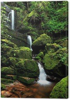 Obraz na Płótnie Piękne strumienia w Moss wodospadu, Phu Soi Dao National Park, U