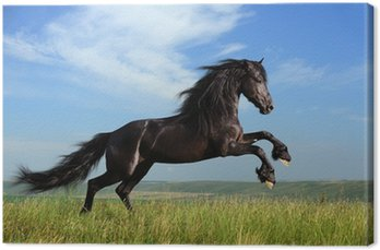 Obraz na Płótnie Piękny czarny koń na polu gry
