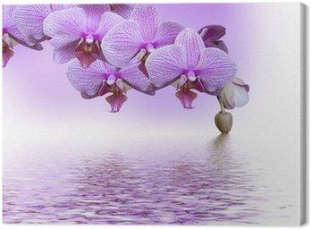 Piękny fioletowy storczyk