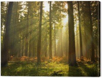 Obraz na Płótnie Piękny las