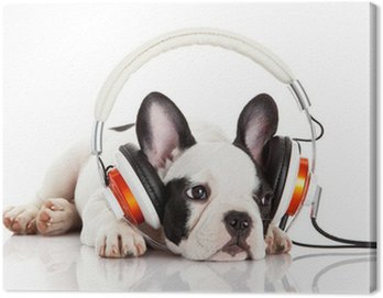 Obraz na Płótnie Pies słuchania muzyki ze słuchawkami na białym backgro