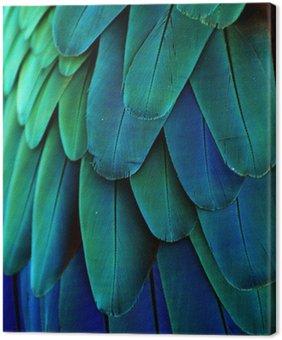 Obraz na Płótnie Pióra ara (niebieski / zielony)