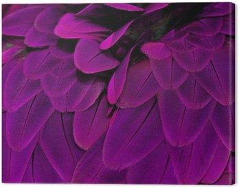 Obraz na Płótnie Pióra; fioletowy