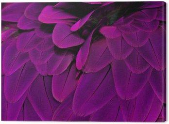 Pióra; fioletowy