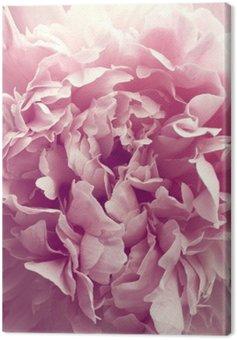 Obraz na Płótnie Piwonia kwiat