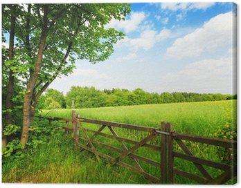 Obraz na Płótnie Płot w zielonym polu pod błękitne niebo