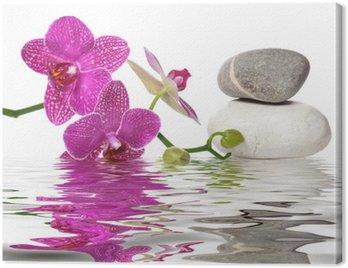 Obraz na Płótnie Po prostu piękne orchidee