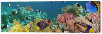 Obraz na Płótnie Podwodne panoramy z angel ryby, rafa koralowa i ryby. czerwony
