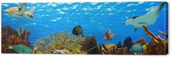 Obraz na Płótnie Podwodne panoramy z tropikalnej rafy na Karaibach