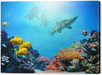 Obraz na Płótnie Podwodne sceny. rafa koralowa, grupy ryb, rekiny