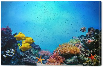 Obraz na Płótnie Podwodne sceny. rafa koralowa, ryby w grupach wody Oceanu jasne
