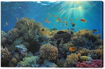 Podwodne widok