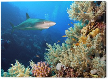 Obraz na Płótnie Podwodne zdjęcia rafy koralowej z rekina i nurków