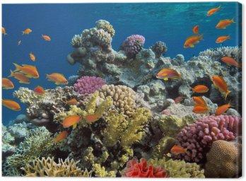 Obraz na Płótnie Podwodny strzelać żywe rafy koralowej z ryb
