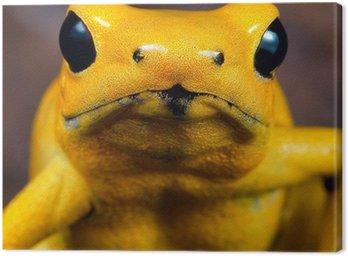 Obraz na Płótnie Poison dart frog