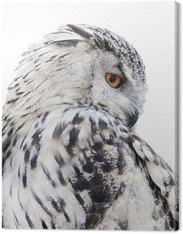 Obraz na Płótnie Pojedyncze czarne i białe sowy